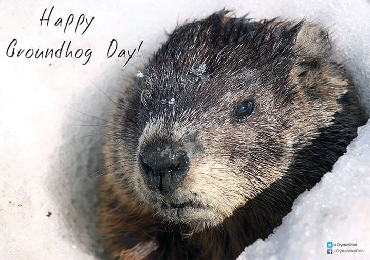 Happy Groundhog Day! :) February 2nd is Candlemas day the day on which according to the Germans the Groundhog peeps out of his winter quarters and if he sees his shadow he pops back for another six weeks nap but if the day be cloudy he remains out as the weather is to be moderate.  #groundhogday #candlemas - http://ift.tt/1oNRVdq