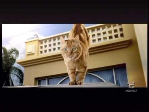 Nuovo Friskies per gatti sterilizzati spot 2010 con Brandon Miao