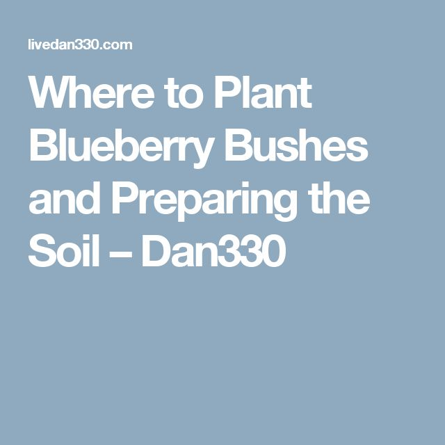 Where to Plant Blueberry Bushes and Preparing the Soil – Dan330