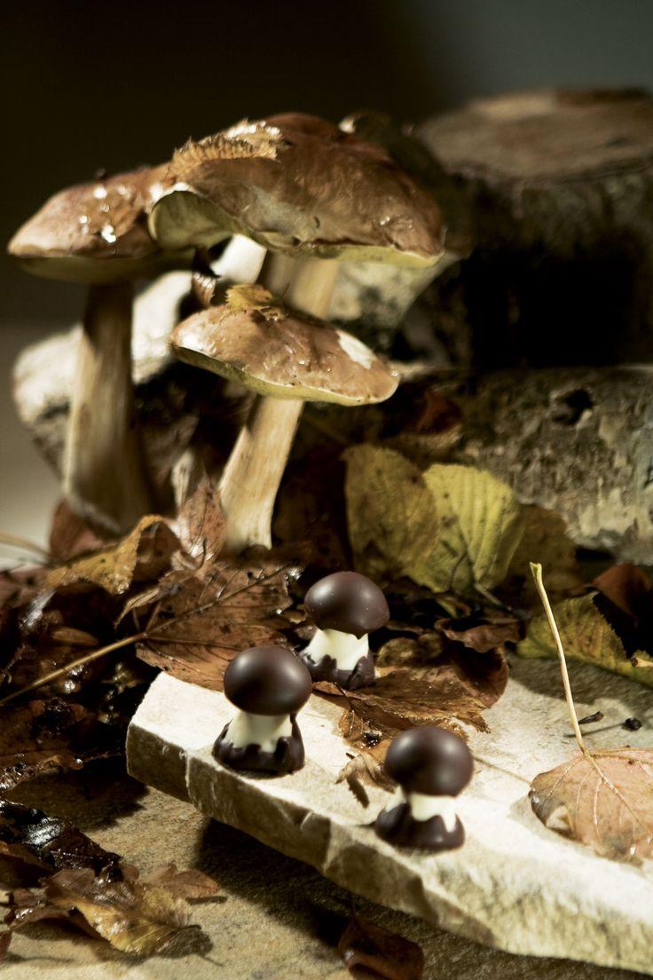 Czekoladowe grzybki - upominek dla grzybiarza :) #chocolate #chocolissimo #giftidea