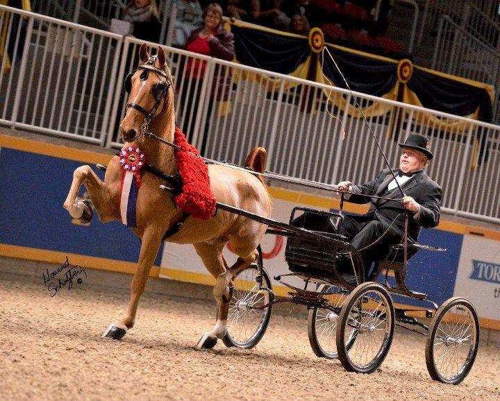 Hackney Horse | Hackney Horse