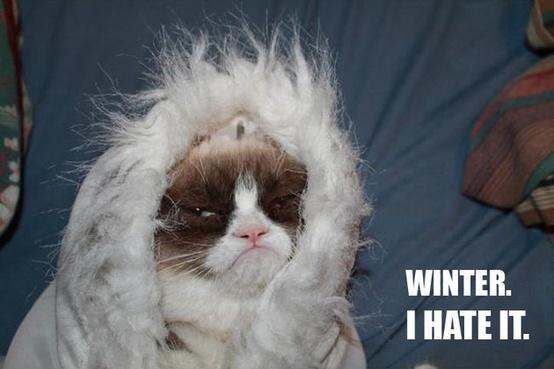 Grumpy cat hates winter