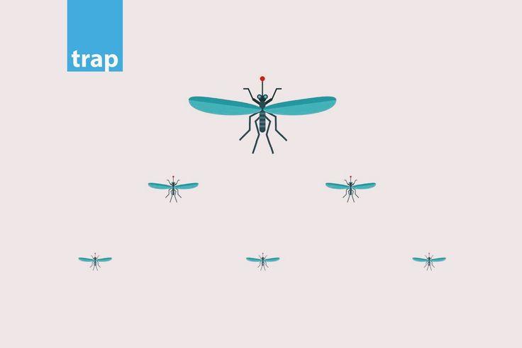 sknipes_trap.jpg (1080×720)