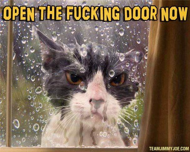 open-fucking-door-now-cat-meme