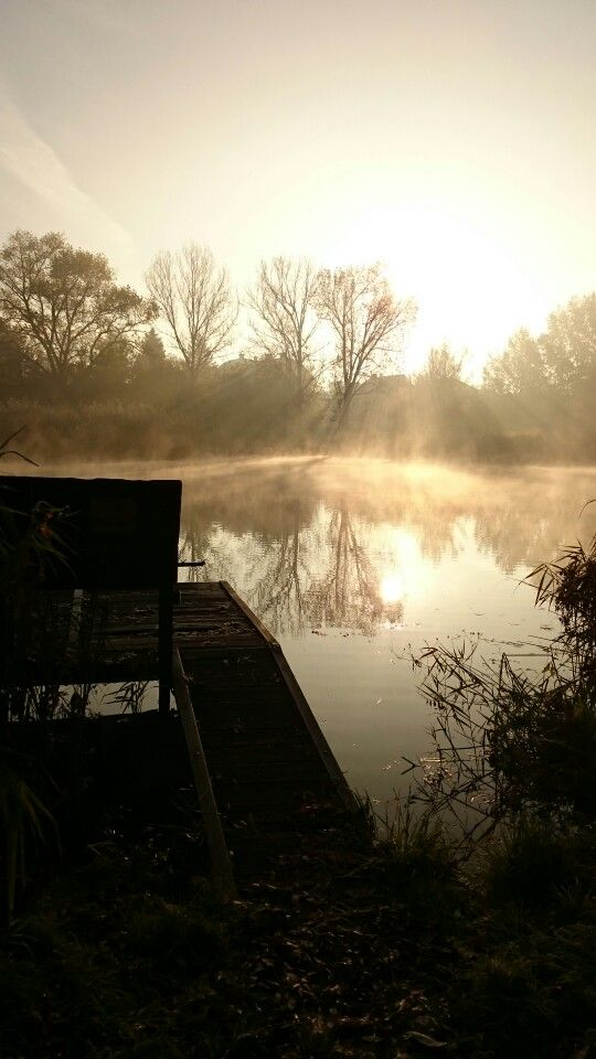 Fog and the lake