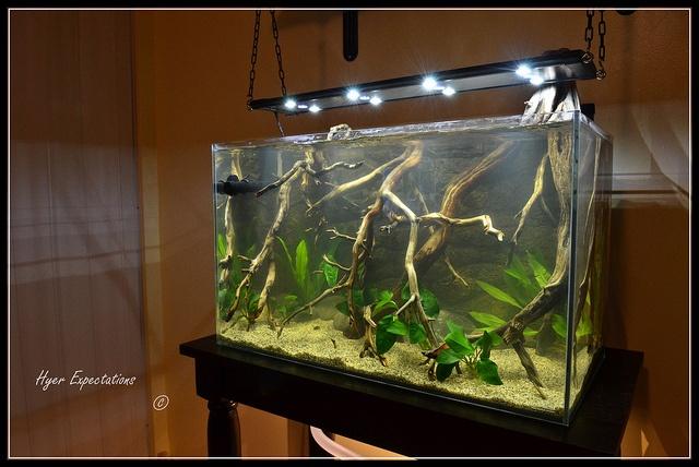 356 best images about aquascapes on pinterest underwater for Amazon aquarium fish