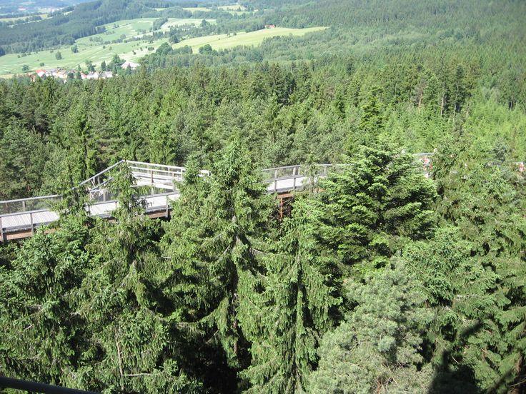Lipno-stezka korunami stromů
