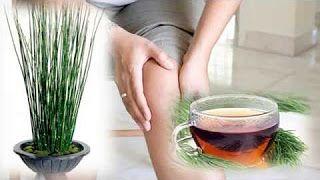 Remedios Para Bajar El Acido Urico Rapido - Como Bajar Y Eliminar El Acido Urico - YouTube