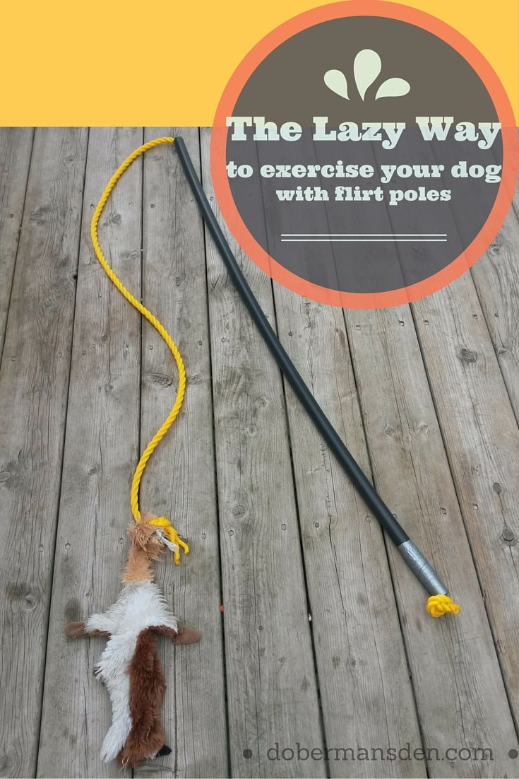 Use flirt poles to exercise your dog as an alternative to dog walks. It's a fun way to exercise high energy dogs. You can even make a DIY flirt pole for cheap.