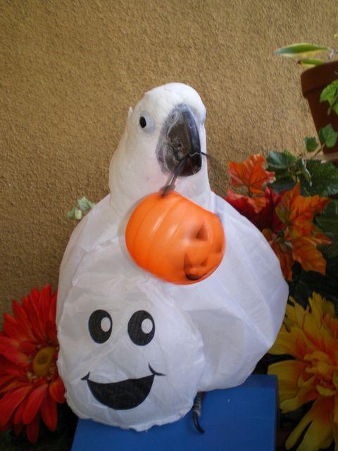 halloween at the zoo okc