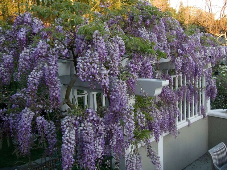 Living-Privacy-Fence-Ideas