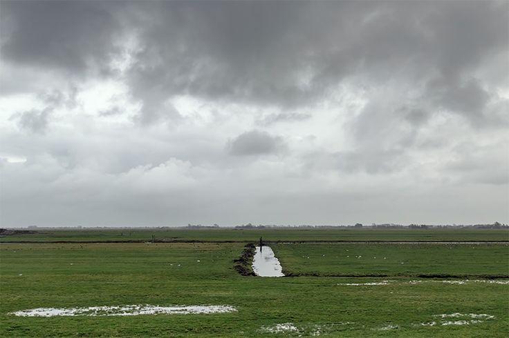 De Mijse polder, het is een natte boel op deze sombere herfstdag.