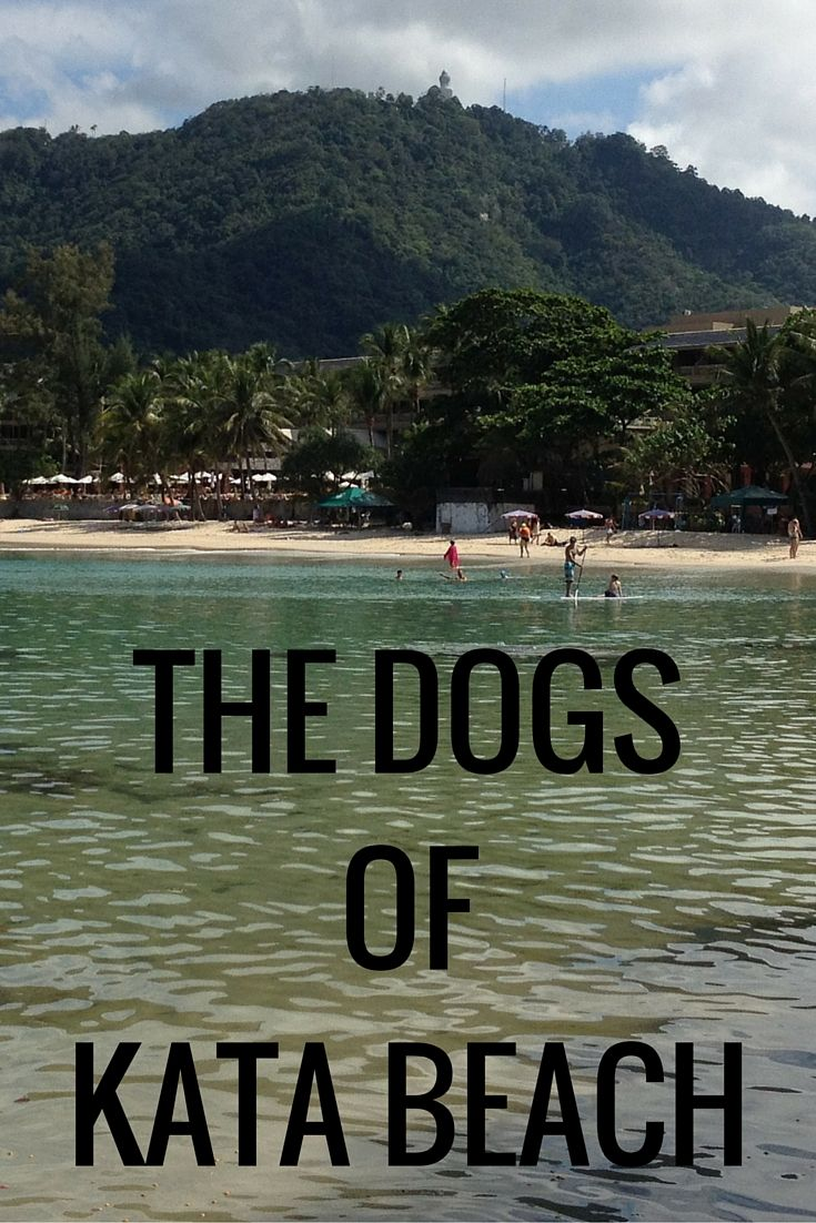 Kata Beach, Phuket, Thailand and the gorgeous dogs who love there.