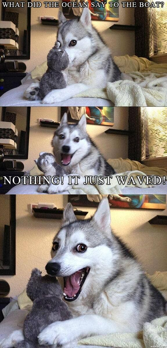 17 Pun Dog Puns That Will Instantly Brighten Your Day Funny Dog Jokes Dog Jokes Funny Dog Memes