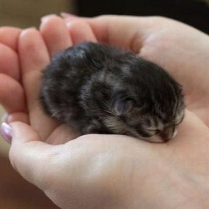 A baby kitten! Awwww. I forgot how tiny and cute they are!