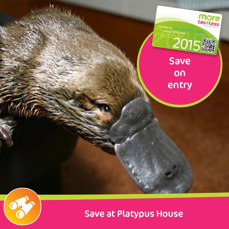 Save with concession price entry at Platypus House  see more, live more, save more in Tasmania with a moretas4less discount card .  For only $37 this little card can save you big dollars