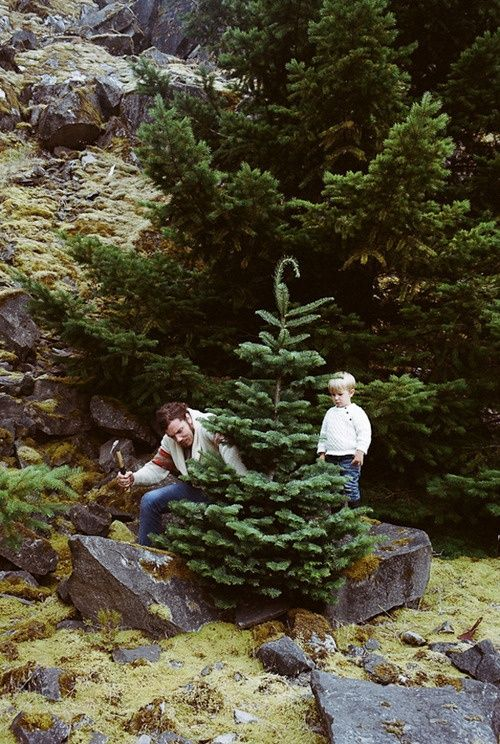 Christmas tree hunting in the woods