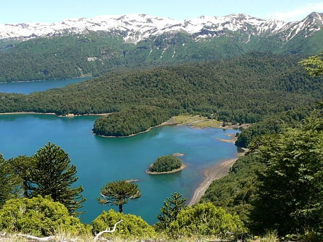 Lago Conguillio Chile. My favorite place to go camping! So many memories!