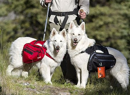 Our Ultimate Trail Pack is versatile and tough, the side panniers can be removed and used as a walking harness. reflective piping and glow in the dark zipper pulls, make it easy to use any time of day. #petfriendly #RCPets #RCPetProducts #canine #CanineEquipment #petfriendly #RCPetProducts