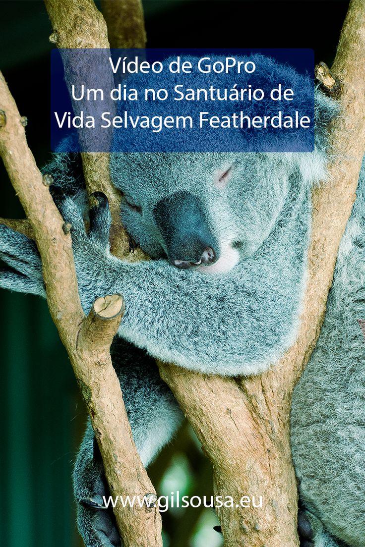Um dia no Santuário de Vida #Selvagem #Featherdale