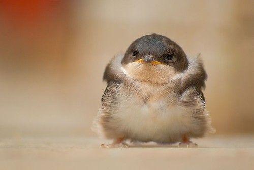"""hellocute: """"Fluffy little fluff ball of fluff. """""""