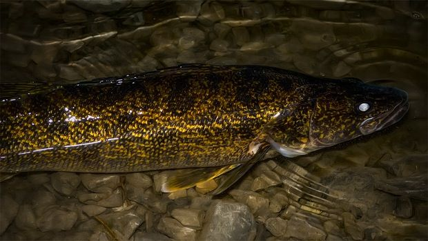 1000 images about fishing on pinterest walleye fishing for Walleye fishing tips