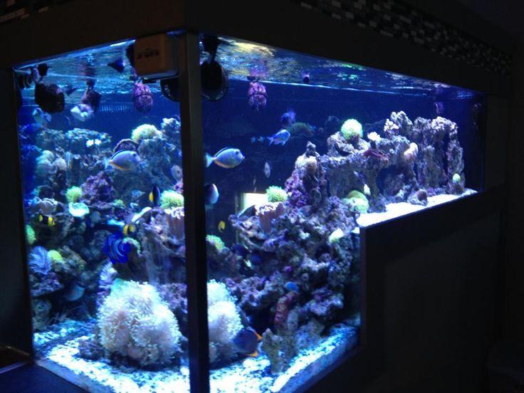 Die besten 25 salzwasser aquarium ideen auf pinterest for Salzwasser aquarium
