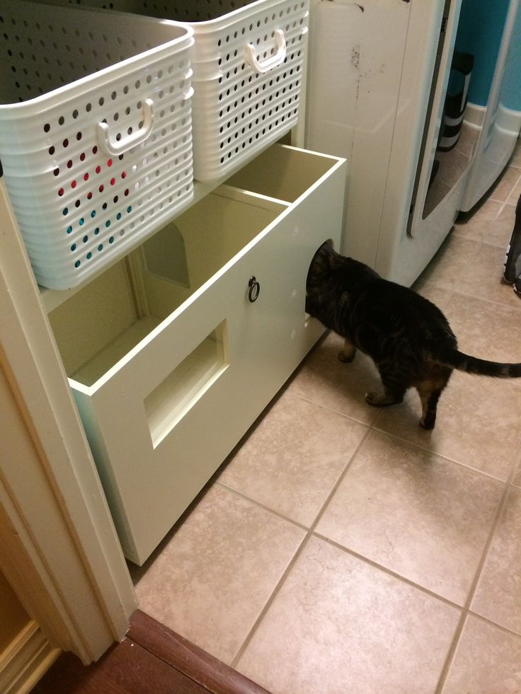 Can Cats See Their Litter Box In The Dark