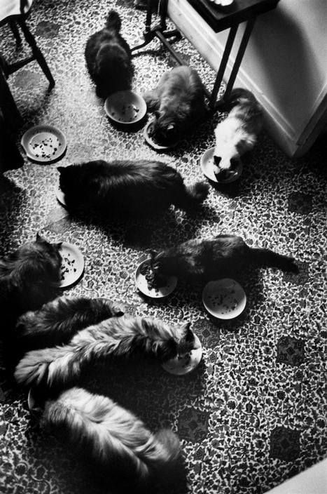 Henri Cartier-Bresson 1961.  Cats of the French painter, Leonor FINI.  The floor pattern is incredible.