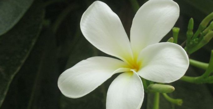 3 Peluang dan Prospek Bisnis Bunga Melati