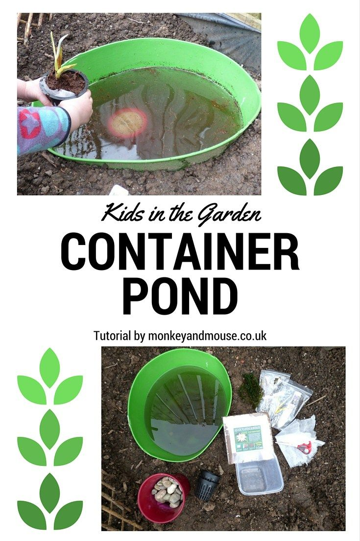 Container Pond – Kids in the Garden Blog Hop