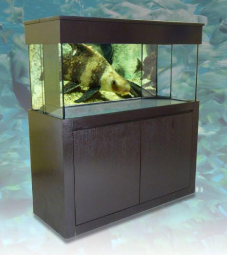 110 best images about aquarium on pinterest deep sea for Glass fish tank