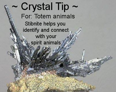 For Totem Animals