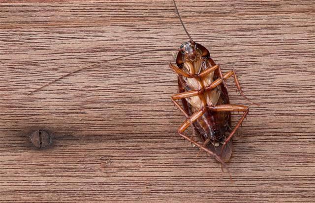0b13c4a987ff0551846274e828fdc30a - How To Get Rid Of Crickets In The House Nz