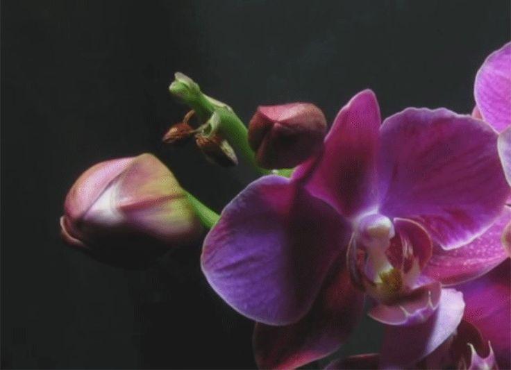 orchidea tartása, gondozása