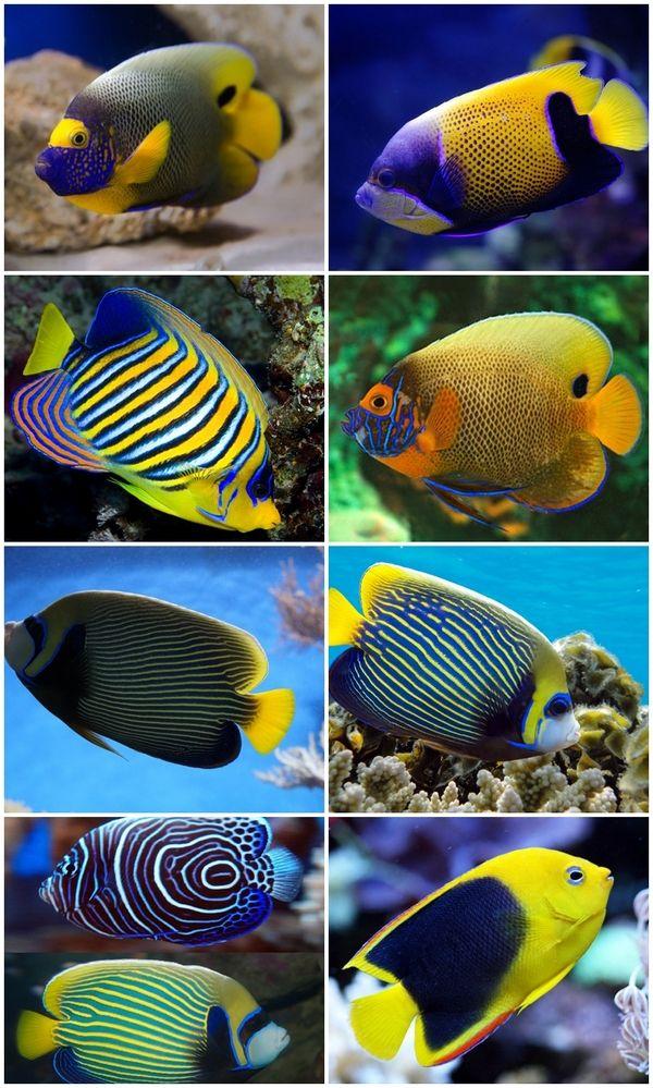 Saltwater Aquarium Fish Species For Beginners Reef Aquascape Designs Saltwater Aquarium Beginner Saltwater Aquarium Aquarium Fish