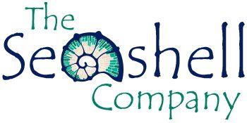 Seashells for Sale | Sea Shells for Decorations & Crafts| The Seashell Company
