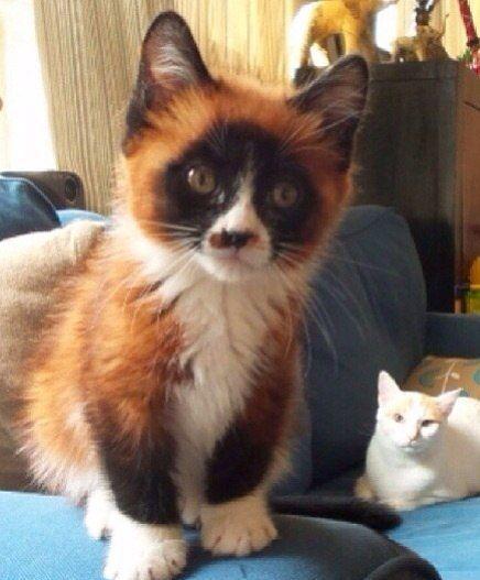 Apprentices Warrior Cats Untold Tales: Clan Of Lavender