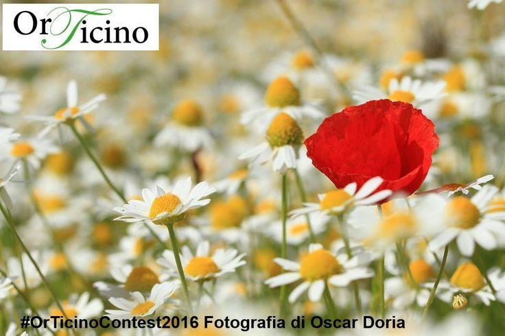OrTicino 2016