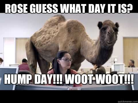 Geico Happy Hump Day Images Happy hump day geico gif hump