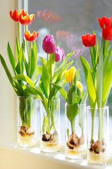 How to grow flowers in a glass! This looks beautiful and seems easy