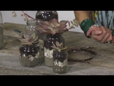 Episode six – Succulent Jars | Everything Flowers