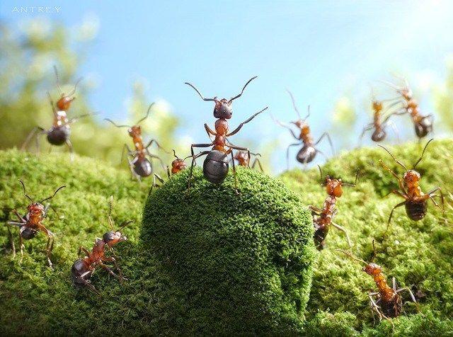 Increíbles fotografías a hormigas, por Andrey Pavlov - arturogoga