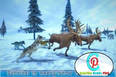 Arctic Wolf Sim 3D v 1.1 [Mod Money] - http://virallable.com/androidcheats/arctic-wolf-sim-3d-v-1-1-mod-money/