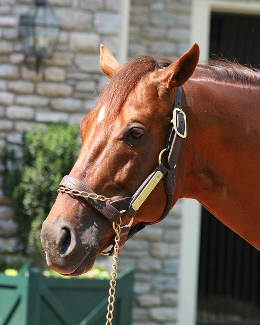 Flower Alley, sire of 2012 Kentucky Derby and Preakness Stakes winner, I'll Have Another