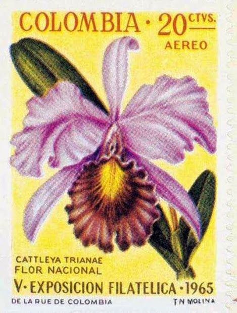 A flor de maio, lírio de maio , Cattleya trianae , pertence à família das orquídeas , é uma planta epífita de folhas carnudas, originária principalmente da Colômbia , embora sua distribuição atinja o Equador .  É a flor nacional da Colômbia e é a orquídea que floresce em maio. A flor de Maio foi escolhida porque tem as mesmas cores da bandeira colombiana .