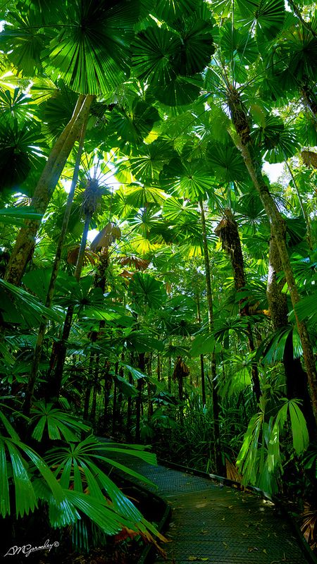 A Walk Through Time: Daintree Rainforest, Queensland