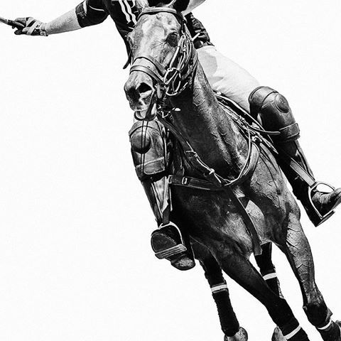 Playing with some polo images today #polo #equinephotographer #equineart #horseart #calicopony