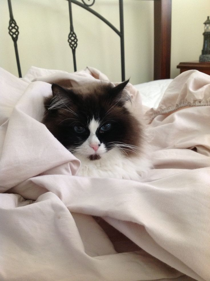 Ruby loves sheet change day.
