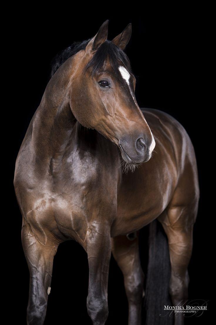 Pferde im Studio 2017 Teil 2 – Monika Bogner Photography – Pferdefotografie und Hundefotografie in Bayern